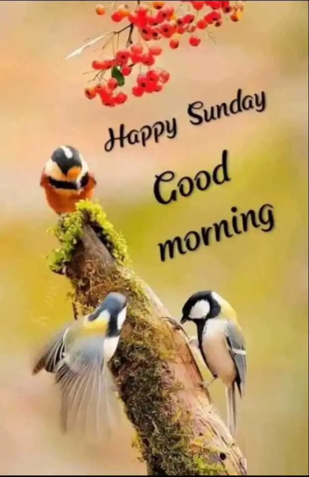 🌅ಶುಭೋದಯ - Happy Sunday Good morning - ShareChat
