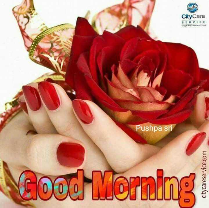 🌅ಶುಭೋದಯ - City Care SERVICE citycareservice com Pushpa sri Good Morning citycareservice . com - ShareChat