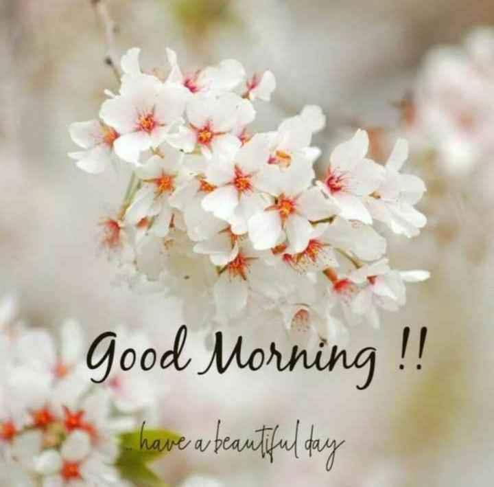 🌅ಶುಭೋದಯ - good Morning ! ! have a beautiful day * * - ShareChat