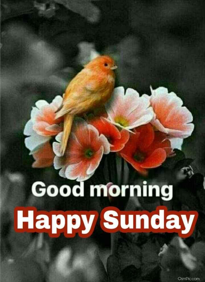🌅ಶುಭೋದಯ - Good morning Happy Sunday Osmic . com - ShareChat