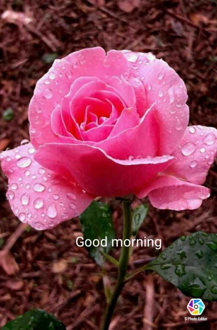 🌅ಶುಭೋದಯ - Good morning S Photo Editor - ShareChat