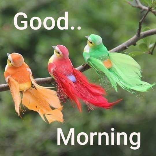 🌅ಶುಭೋದಯ - Good . . Morning - ShareChat