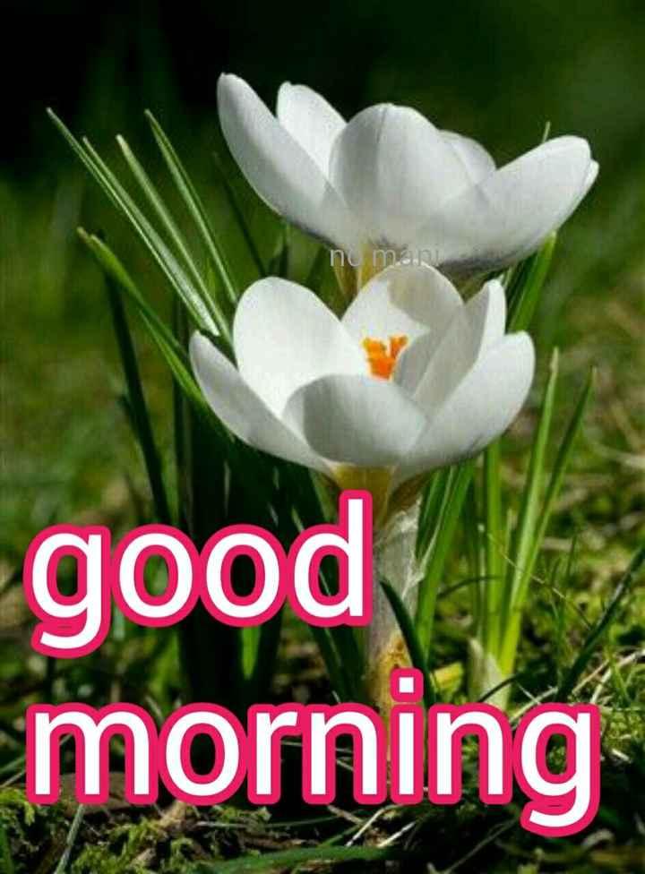 ಶುಭೋದಯ - no manj good morning - ShareChat