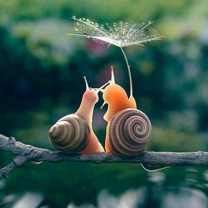 🏠 ಹಬ್ಬದ Decoration - ShareChat