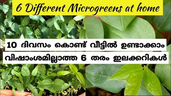 😢 കോവിഡ് 19 - 6 Different Microgreens at home 10 ദിവസം കൊണ്ട് വീട്ടിൽ ഉണ്ടാക്കാം വിഷാംശമില്ലാത്ത 6 തരം ഇലക്കറികൾ - ShareChat