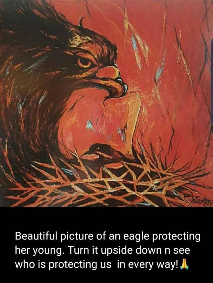⛪ ക്രിസ്തീയ വിശ്വാസം - Beautiful picture of an eagle protecting her young . Turn it upside down n see who is protecting us in every way ! I , - ShareChat