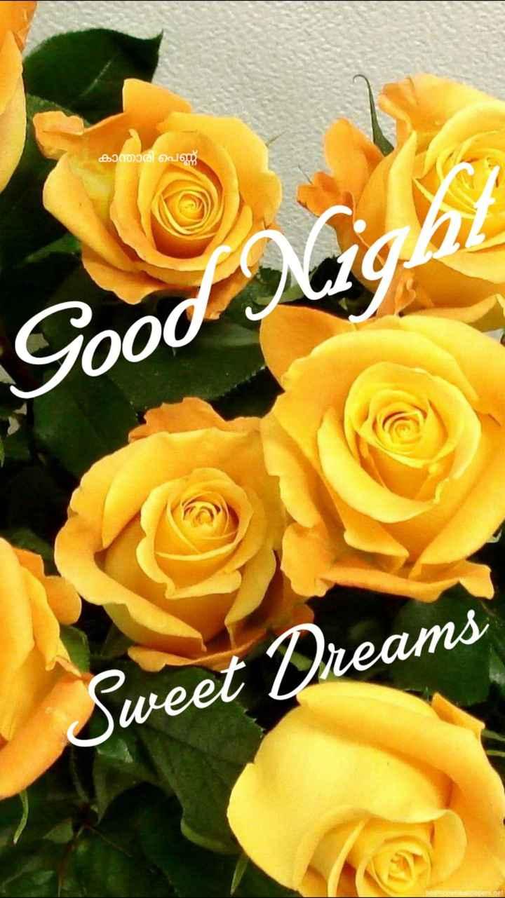 🌃 ഗുഡ് നൈറ്റ് - കാന്താരി പെണ്ണ് Good Sweet Dreams P eter net - ShareChat