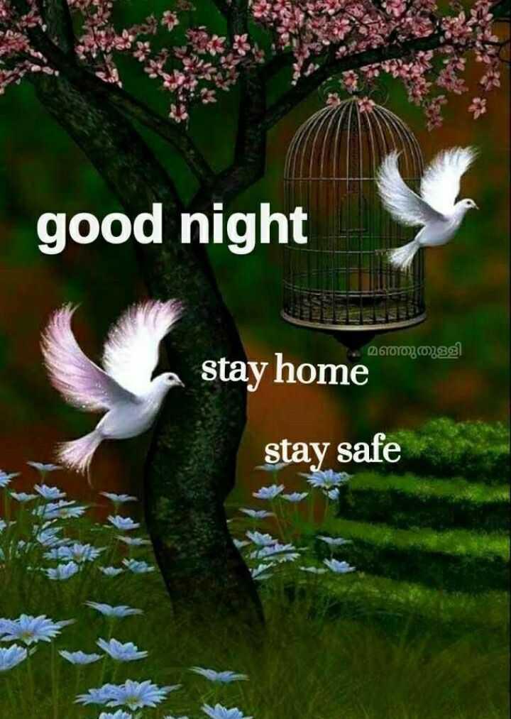 🌃 ഗുഡ് നൈറ്റ് - good night മഞ്ഞുതുള്ളി stay home stay safe - ShareChat