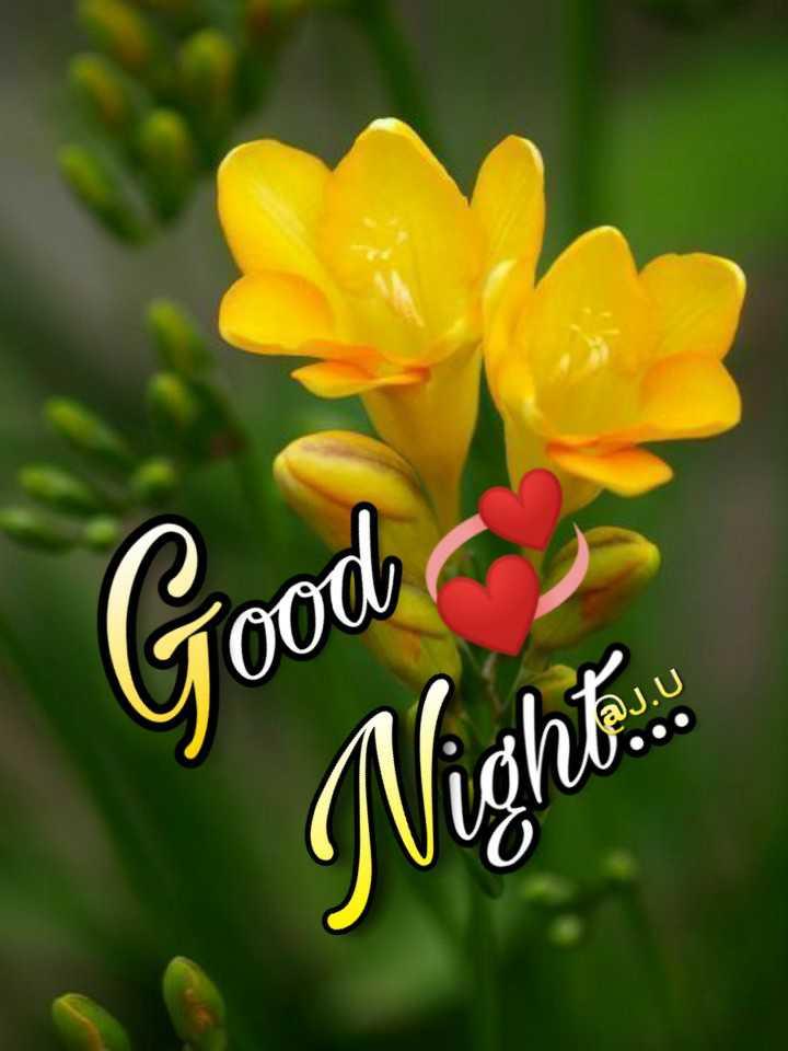 🌃 ഗുഡ് നൈറ്റ് - Good Night . : - ShareChat