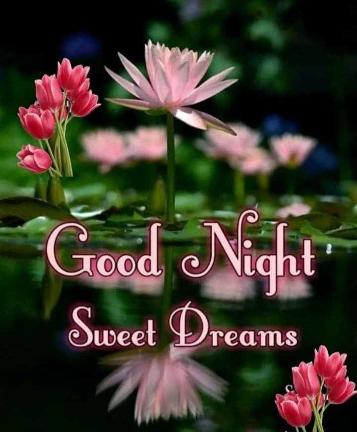 🌃 ഗുഡ് നൈറ്റ് - Good Night Sweet Dreams - ShareChat
