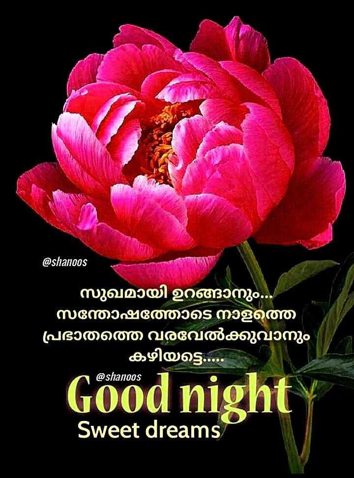 🌃 ഗുഡ് നൈറ്റ് - @ shanoos സുഖമായി ഉറങ്ങാനും . സന്തോഷത്തോടെ നാളത്ത ' പ്രഭാതത്തെ വരവേൽക്കുവാനും ' കഴിയട്ടെ . . . . @ shanoos Good night Sweet dreams - ShareChat