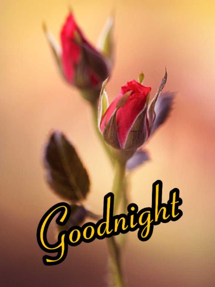 🌃 ഗുഡ് നൈറ്റ് - Goodnight - ShareChat