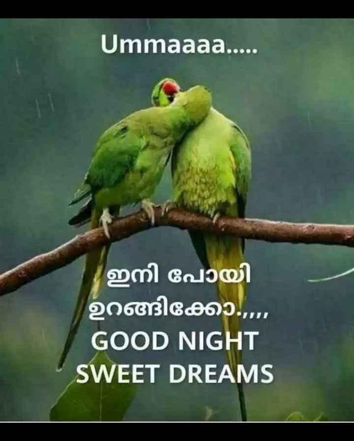 🌃 ഗുഡ് നൈറ്റ് - Ummaaaa . . . . ഇനി പോയി ഉറങ്ങിക്കോ . . . . GOOD NIGHT SWEET DREAMS - ShareChat