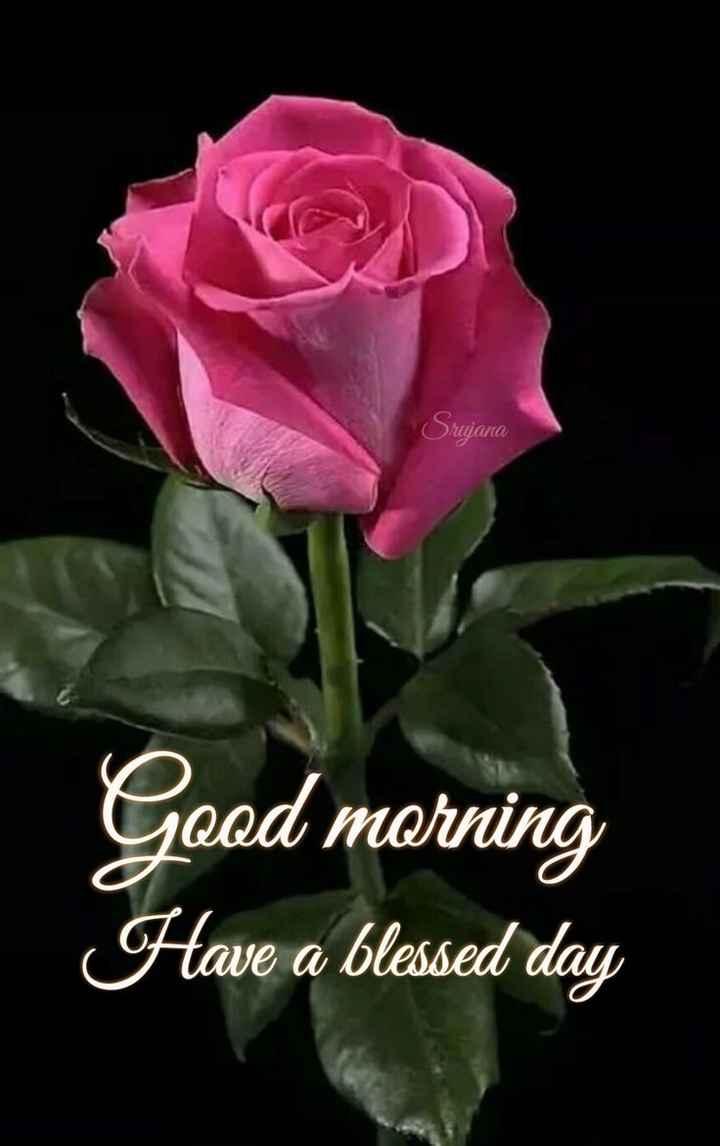 🌞 ഗുഡ് മോണിംഗ് - Sujana Good morning Have a blessed day - ShareChat