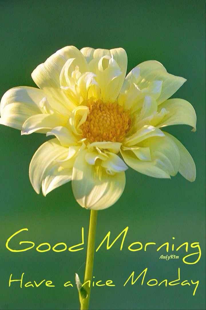 🌞 ഗുഡ് മോണിംഗ് - Good Morning Have attice Monday Andykim - ShareChat