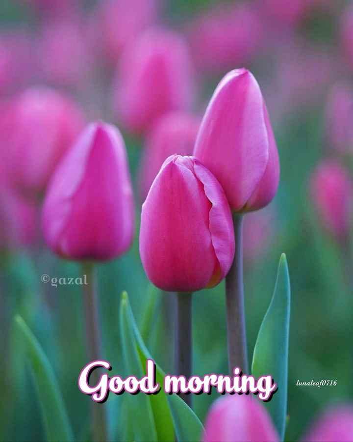 🌞 ഗുഡ് മോണിംഗ് - ©gazal Good morning lunaleaf0716 - ShareChat