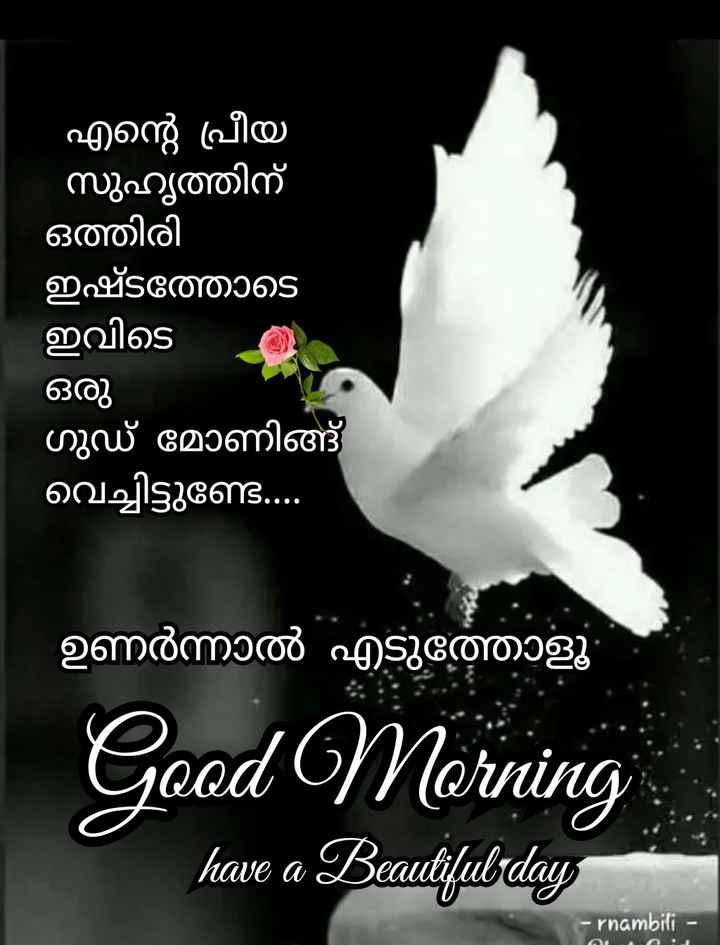 🌞 ഗുഡ് മോണിംഗ് - എന്റെ പ്രീയ സുഹൃത്തിന് ഒത്തിരി ഇഷ്ടത്തോടെ ഇവിടെ ഒരു ഗുഡ് മോണിങ്ങ് വെച്ചിട്ടുണ്ട് . . . ഉണർന്നാൽ എടുത്തോളൂ Good Morning have a Beautiful day - rnambili - - ShareChat