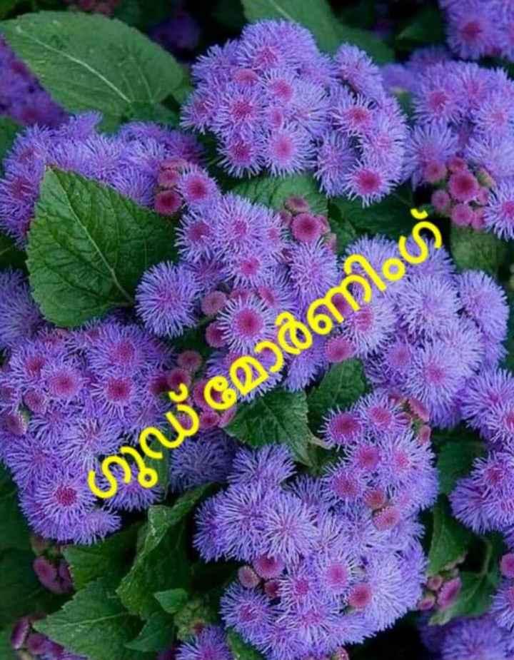 🌞 ഗുഡ് മോണിംഗ് - മാണി ഗ് - ShareChat