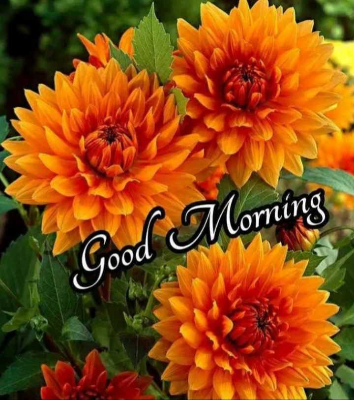 🌞 ഗുഡ് മോണിംഗ് - Morning yood - ShareChat