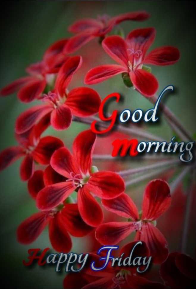 🌞 ഗുഡ് മോണിംഗ് - ood orning appy Friday - ShareChat