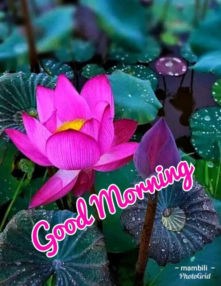 🌞 ഗുഡ് മോണിംഗ് - Good Morning - rnambili - PhotoGrid - ShareChat