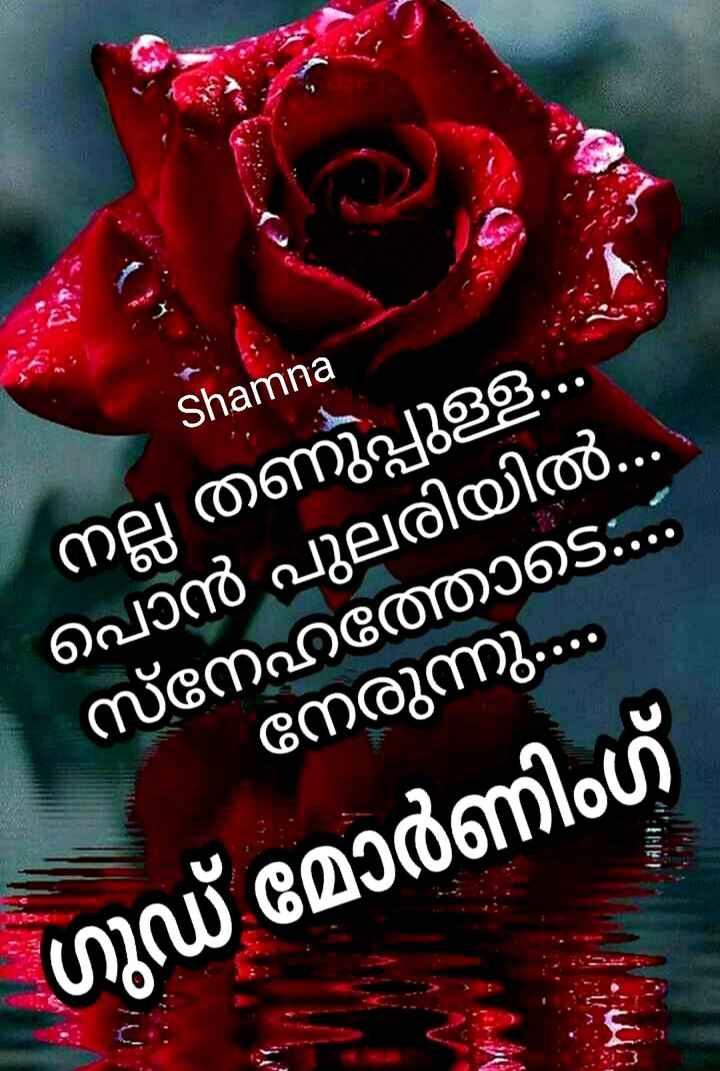 🌞 ഗുഡ് മോണിംഗ് - Shamina നല്ല തണുപ്പുള്ള . . പൊൻ പുലരിയിൽ . . . സ്നേഹത്തോടെ . . . നേരുന്നു . . ഗുഡ് മോർണിംഗ് ( 11 : 11 : - ShareChat