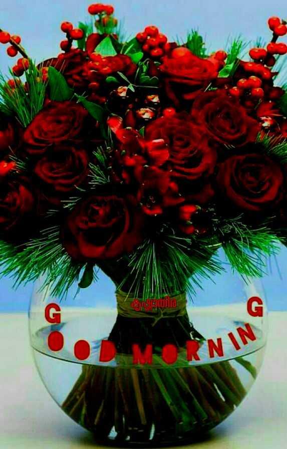 🌞 ഗുഡ് മോണിംഗ് - dolo NINY - ShareChat