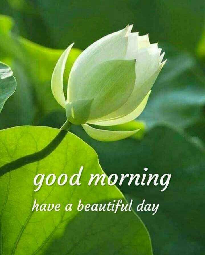 🌞 ഗുഡ് മോണിംഗ് - good morning have a beautiful day - ShareChat