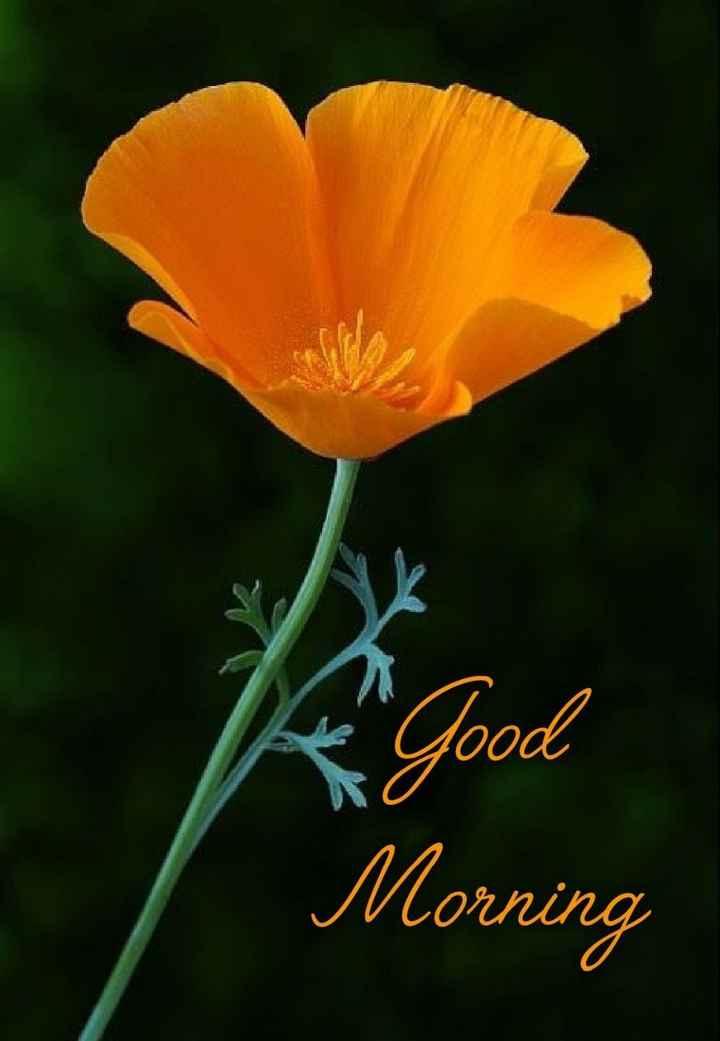 🌞 ഗുഡ് മോണിംഗ് - Good 0 Morning - ShareChat