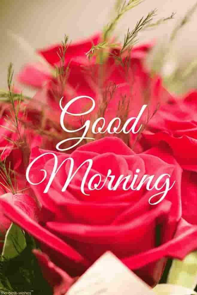 🌞 ഗുഡ് മോണിംഗ് - yaad Morning The best wishes - ShareChat