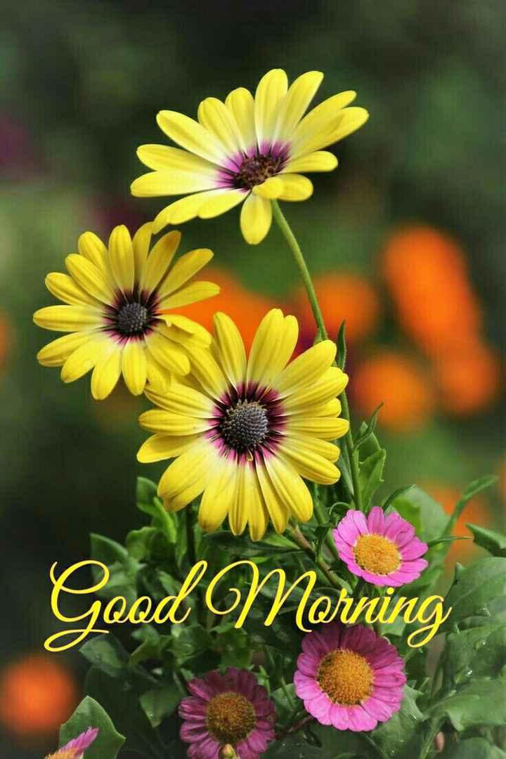 🌞 ഗുഡ് മോണിംഗ് - Good Mornin - ShareChat