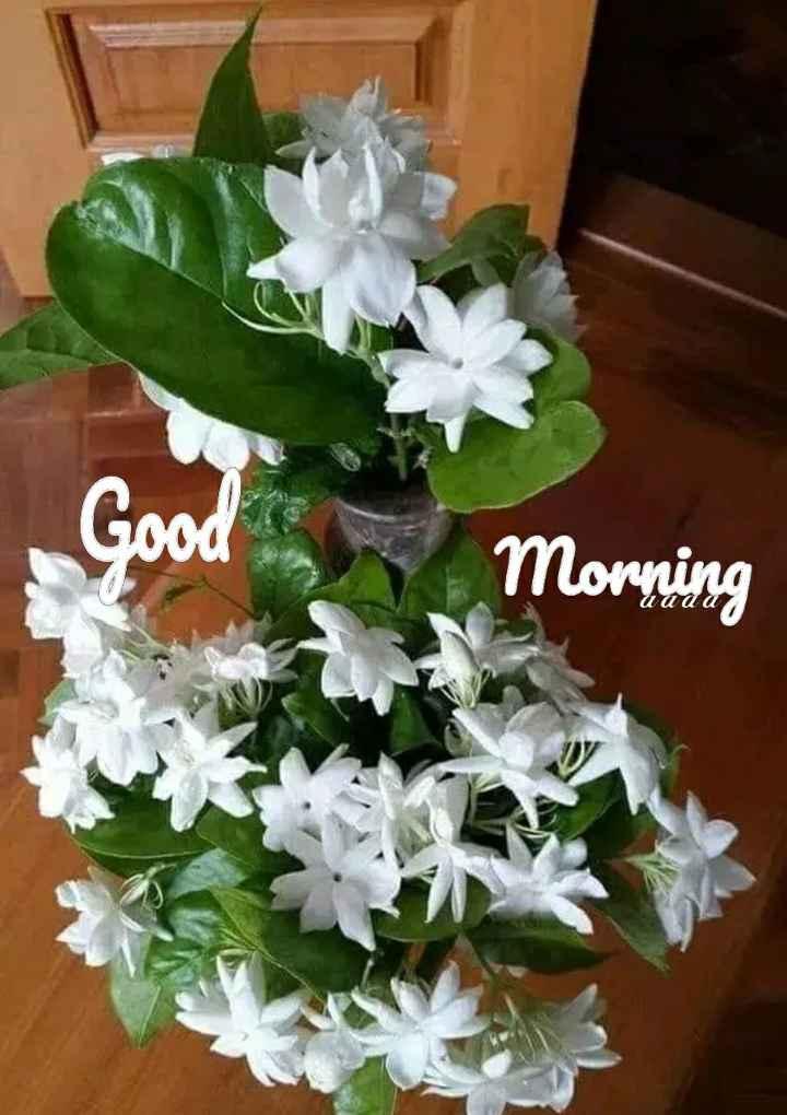 🌞 ഗുഡ് മോണിംഗ് - Good Good Morning - ShareChat