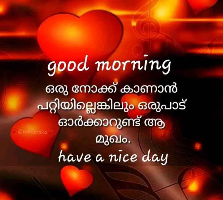 🌞 ഗുഡ് മോണിംഗ് - good morning ഒരു നോക്ക് കാണാൻ പറ്റിയില്ലെങ്കിലും ഒരുപാട് ഓർക്കാറുണ്ട് ആ മുഖം . have a nice day @ saheersha - ShareChat