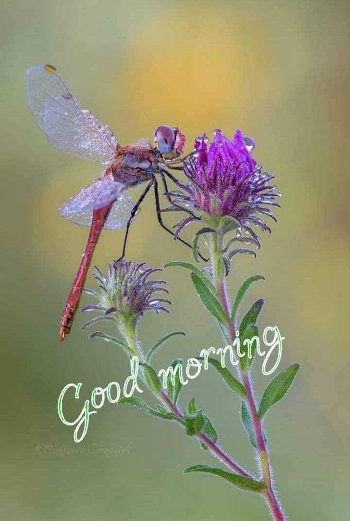 🌞 ഗുഡ് മോണിംഗ് - Cood morn27 - ShareChat