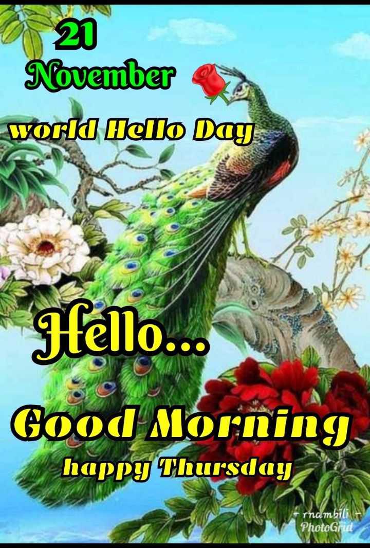 🌞 ഗുഡ് മോണിംഗ് - November world fello மார - Hello . . . Good Morning . happy Thursday rnambili PhotoGrid - ShareChat