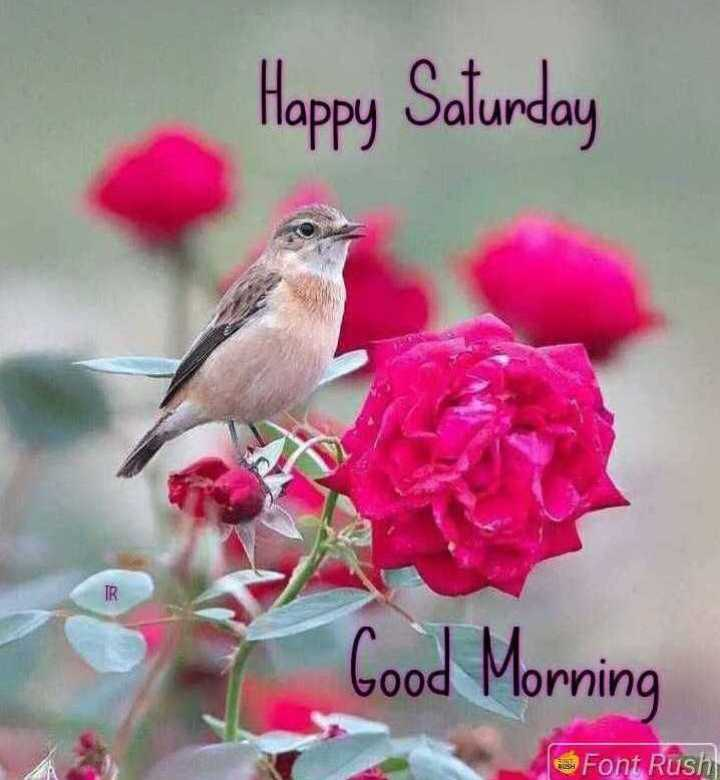 🌞 ഗുഡ് മോണിംഗ് - Happy Saturday Good Morning Font Rush - ShareChat