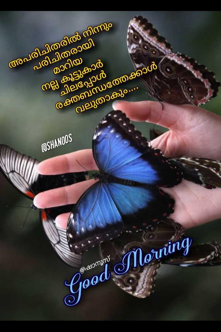 🌞 ഗുഡ് മോണിംഗ് - അപരിചിതരിൽ നിന്നും പരിചിതരായി മാറിയി നല്ല കൂട്ടുകാർ ചിലപ്പോൾ രക്തബന്ധത്തെക്കാൾ വലുതാകും . . . . ASHANOOS @ ഷാനൂസ് Cood Morning - ShareChat