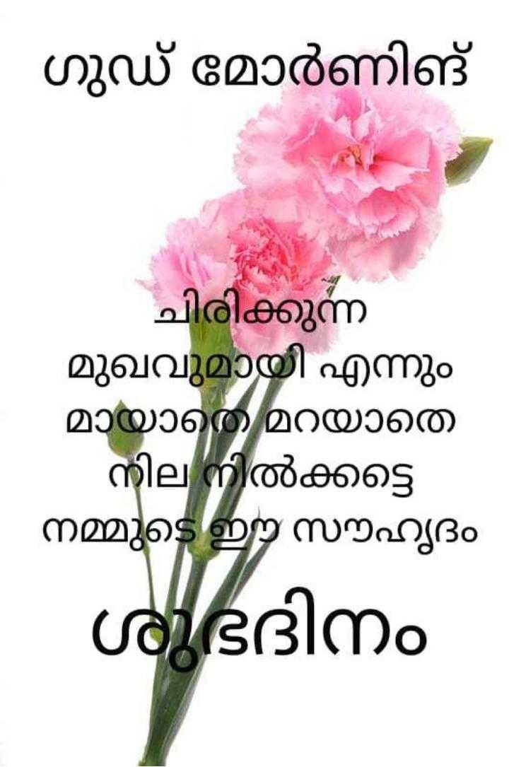 🌞 ഗുഡ് മോണിംഗ് - - ഗുഡ് മോർണിങ് ചിരിക്കുന്ന മുഖവുമായി എന്നും മായാതെ മറയാതെ - നില നിൽക്കട്ടെ നമ്മുടെ ഈ സൗഹൃദം ശുഭദിനം - ShareChat