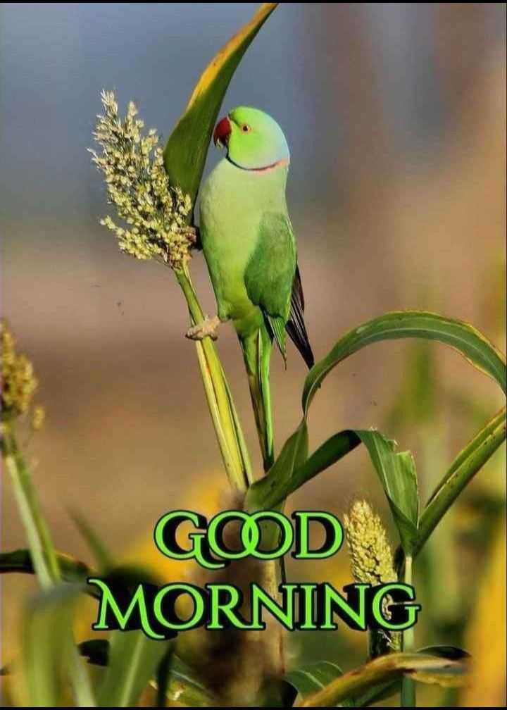 🌞 ഗുഡ് മോണിംഗ് - GOD MORNING - ShareChat
