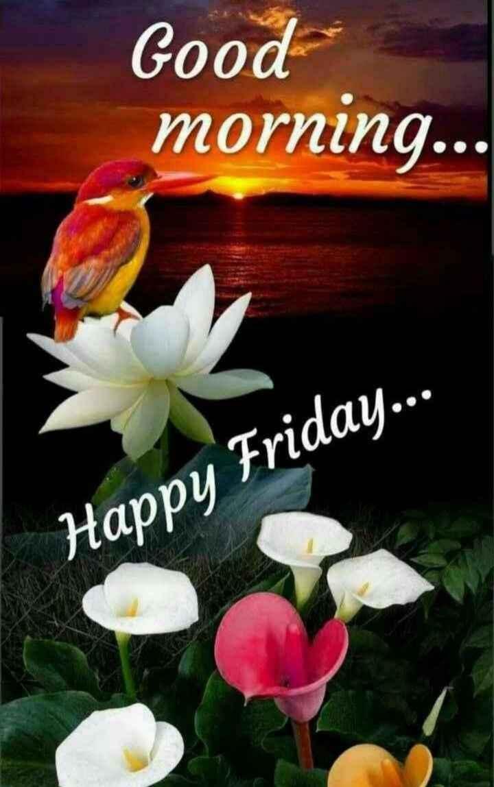 🌞 ഗുഡ് മോണിംഗ് - Good morning . . . Happy Friday . . . - ShareChat