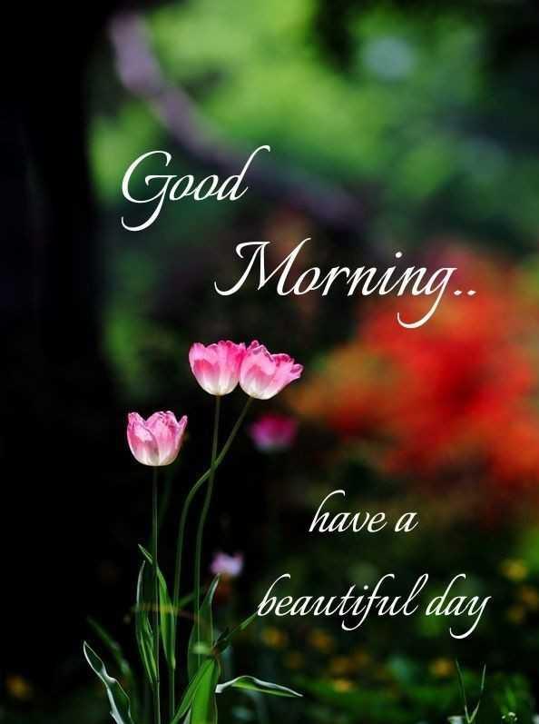 🌞 ഗുഡ് മോണിംഗ് - Good Morning . . . have a beautiful day - ShareChat