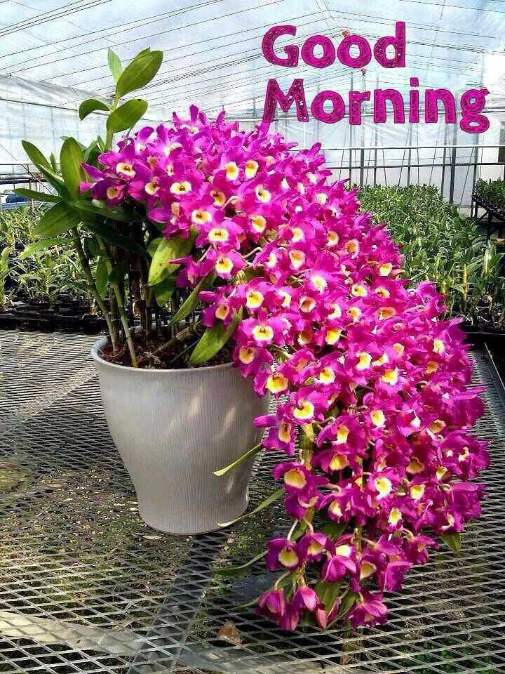 🌞 ഗുഡ് മോണിംഗ് - Good Morning Thi re 3620 SA - ShareChat