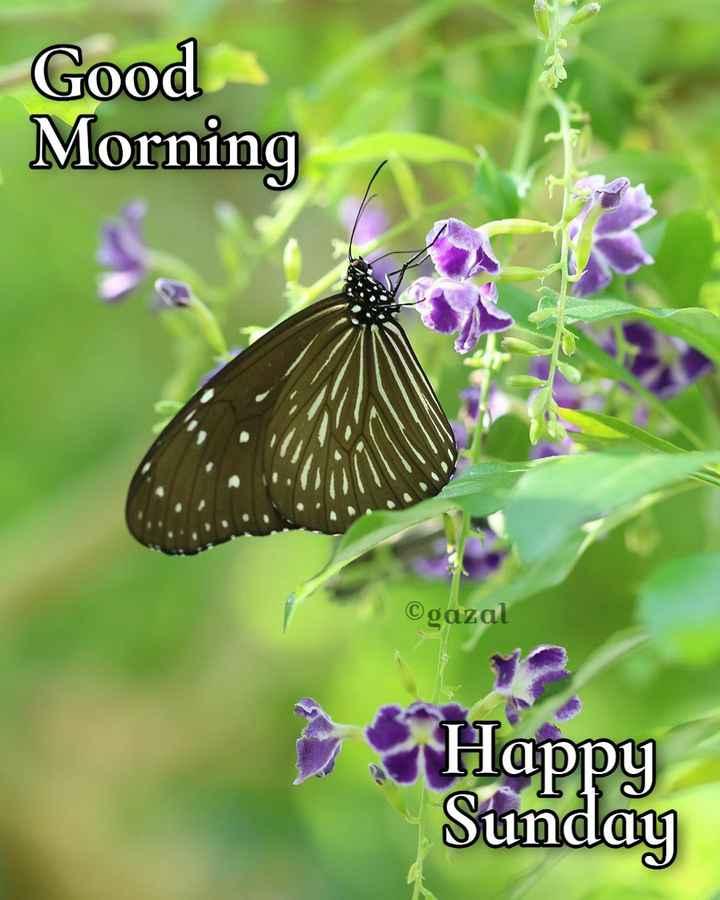 🌞 ഗുഡ് മോണിംഗ് - Good Morning ©gazal Happy Sunday - ShareChat