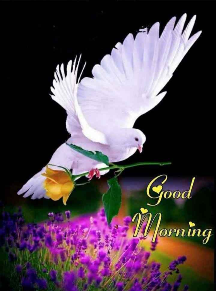🌞 ഗുഡ് മോണിംഗ് - O W Morning - ShareChat