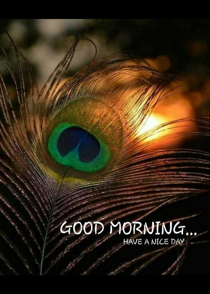 🌞 ഗുഡ് മോണിംഗ് - GOOD MORNING . . . HAVE A NICE DAY - ShareChat