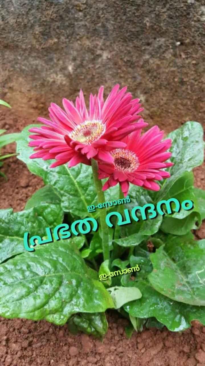 🌞 ഗുഡ് മോണിംഗ് - ഈ സോൺ ഭതേ വദനം ഇ - സോൺ - ShareChat