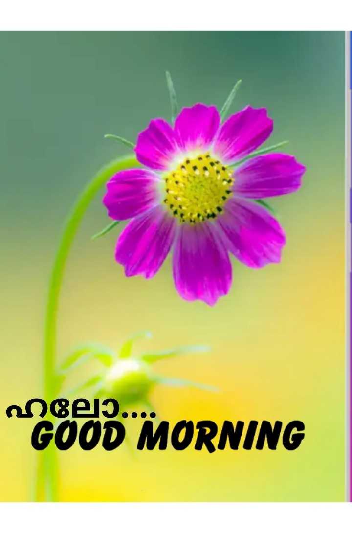 🌞 ഗുഡ് മോണിംഗ് - engely . . . . GOOD MORNING - ShareChat