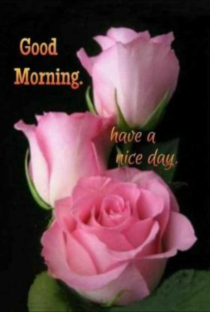 🌞 ഗുഡ് മോണിംഗ് - Good Morning . have a nice day . - ShareChat