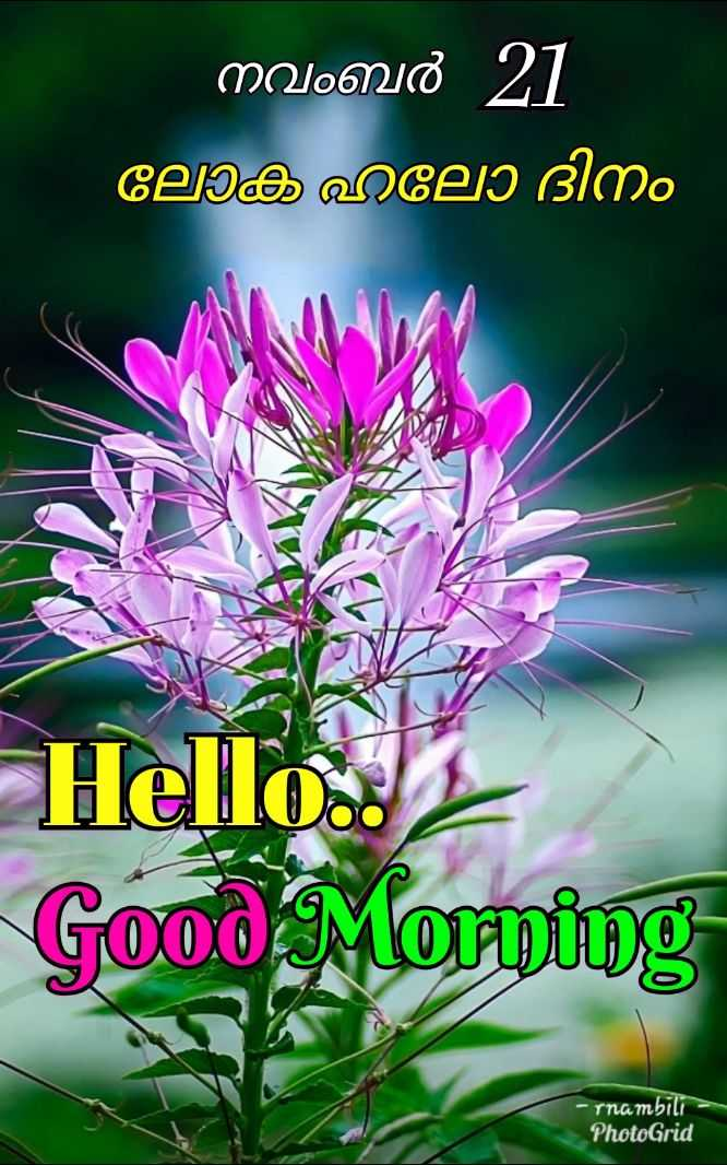 🌞 ഗുഡ് മോണിംഗ് - നവംബർ 21 ' ലോക ഹലോ ദിനം Hello . . 2 Good Morning - rna mbili PhotoGrid - ShareChat