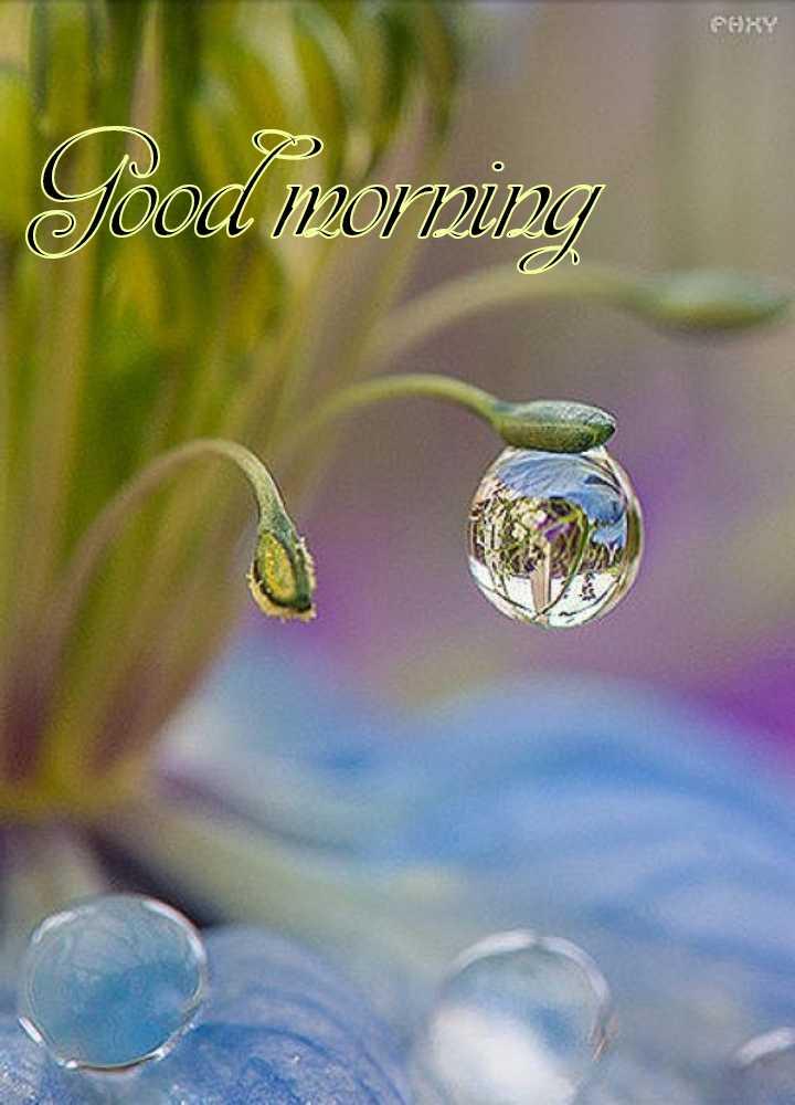 🌞 ഗുഡ് മോണിംഗ് - Tood morning - ShareChat
